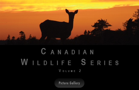 Canadian Wildlife Series by Rolf Bouman